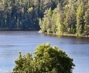 Panorama of the shore of the lake covered with dense forest