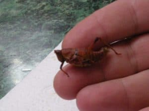 Edible insect cuisine